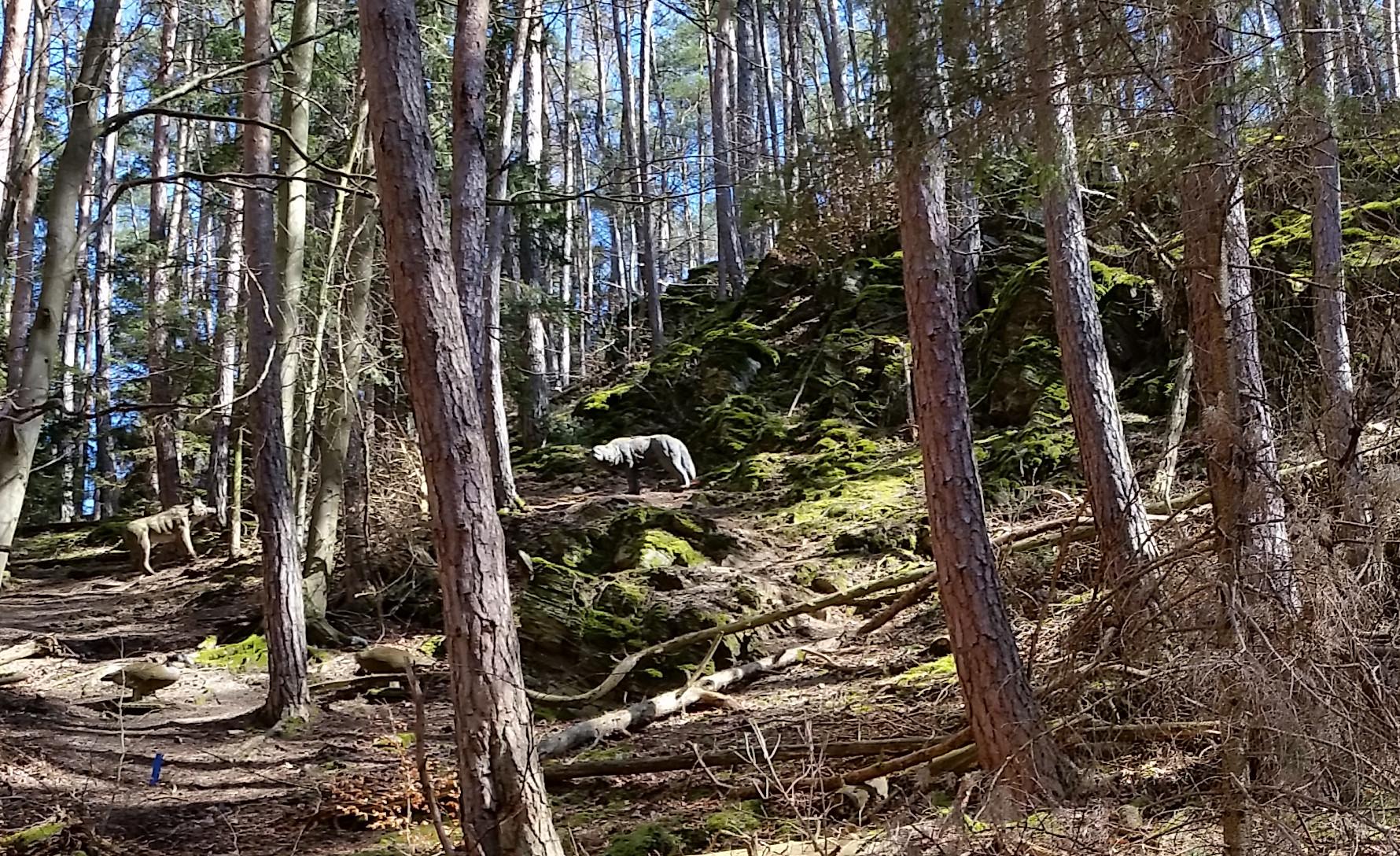 3D-Bogenparcours Bowra: 3D-Ziel Wolfsrudel an Steilhang, Copyright: Pfeilflug 1998 e.V. Urheber: Steffen Dahms
